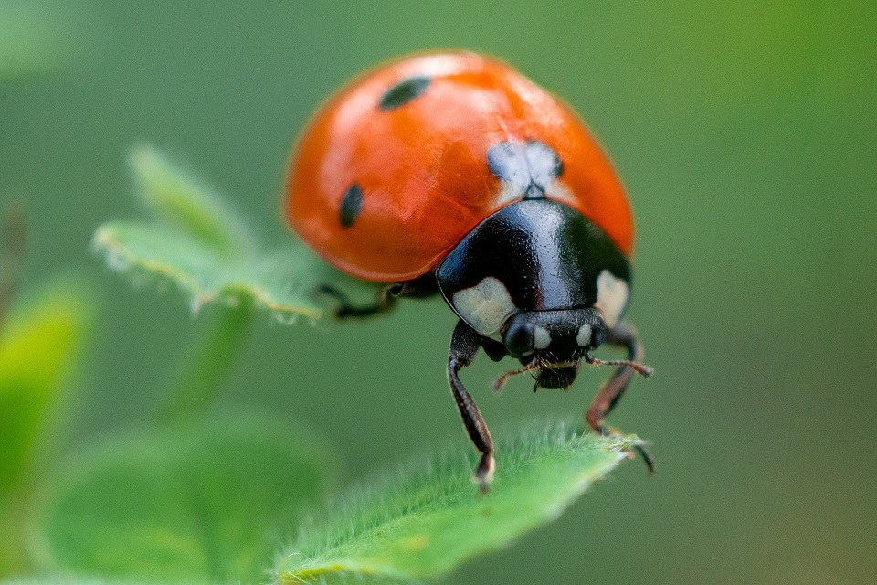 Macro Photography Tips For Beginners
